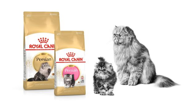 2-TH-Find-the-right-food-for-your-cat-breed-cats_Med._Res.___Basic